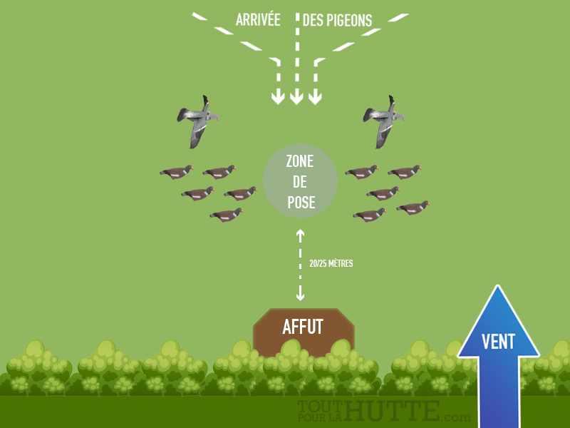 technique chasse pigeon hypaflap