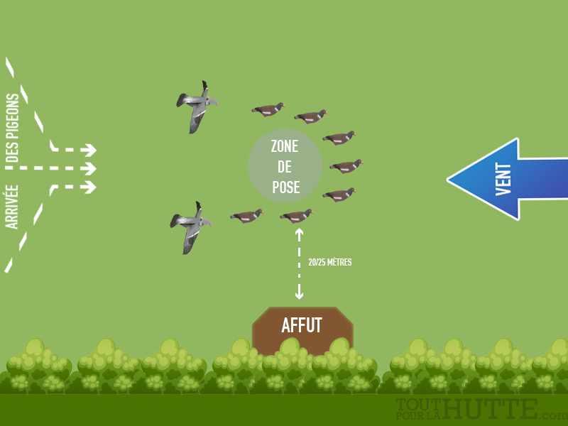 comment installer ses formes de pigeons