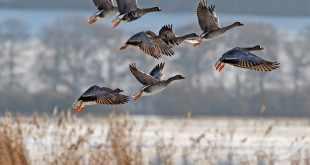 Alerte migration !
