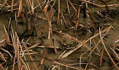 muddy-water-camo