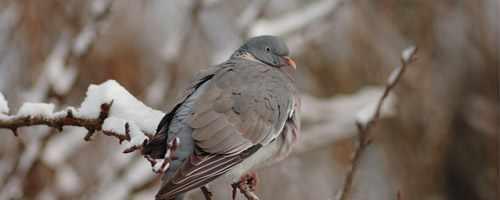 Guide d'achat noel du chasseur de pigeon