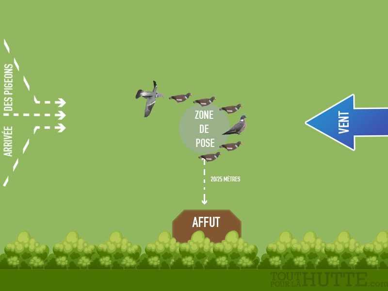 Techniques chasse pigeon avec appelant