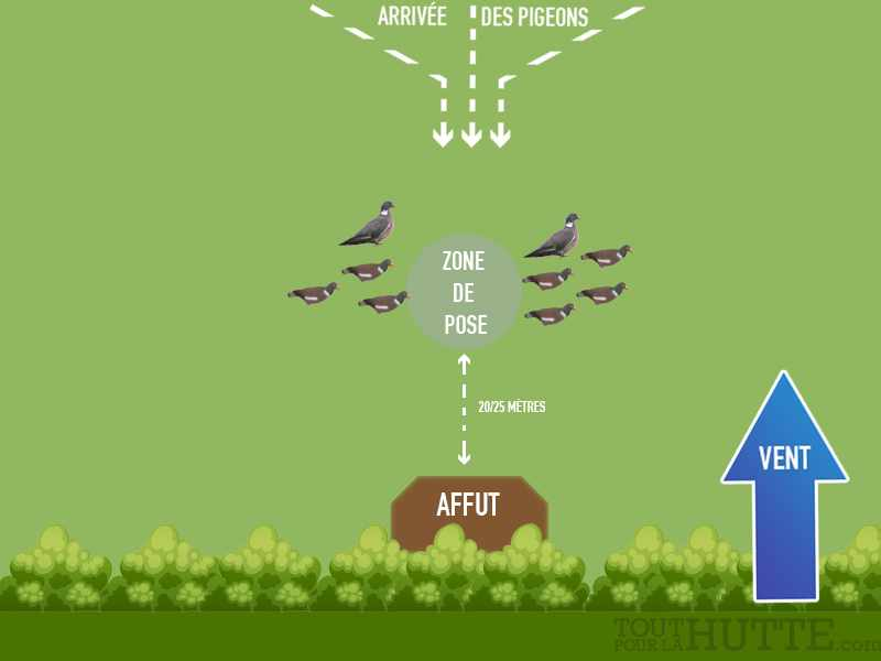 5 attelages pour chasser le pigeon avec appelants le blog toutpourlahutte - Faire fuir les pigeons ...
