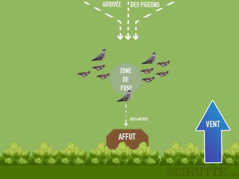 Chasse du pigeon avec 3 appelants