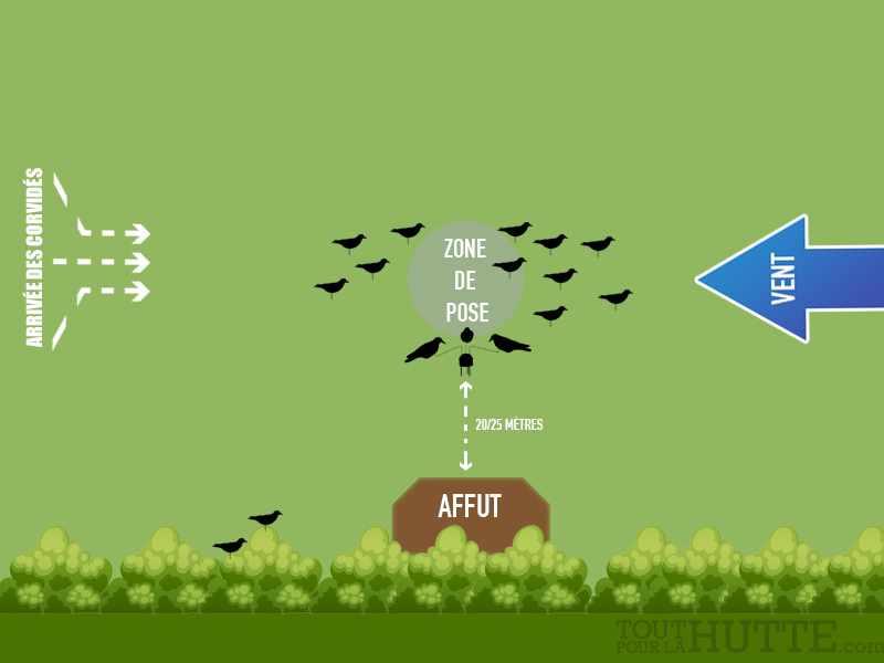 5 attelages pour chasser les corvidés