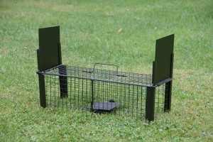 8 techniques pour protéger son parc des rongeurs