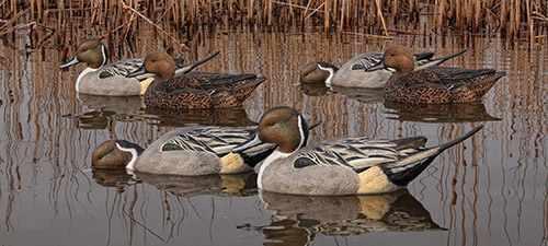 Formes de canards AvianX