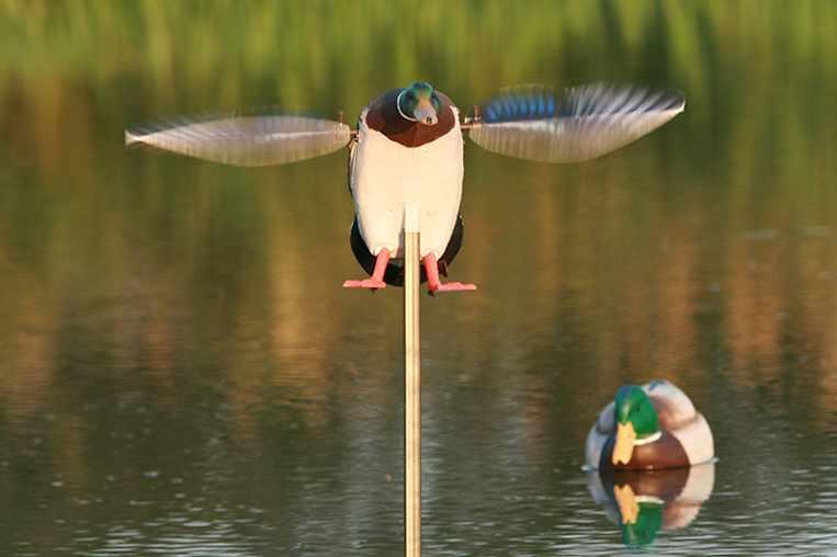 canard-ailes-tournantes