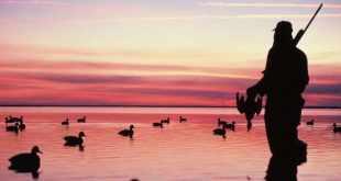 Astuces pour réussir votre ouverture de chasse aux gibiers d'eau