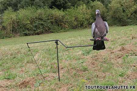 Les m canismes pour chasser le pigeon avec appelant vivant - Fabrication glue pour chasse ...