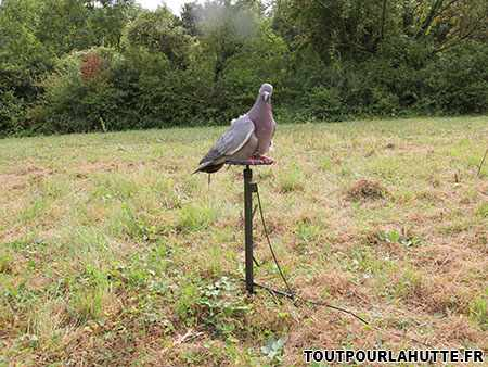 Pompe chasse pigeon