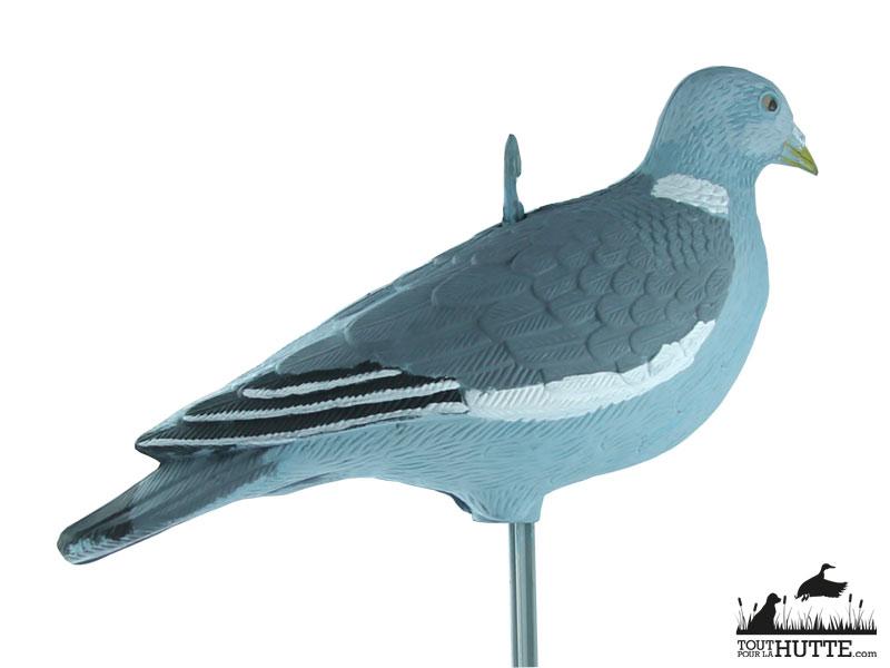 Pigeon Bird Vision
