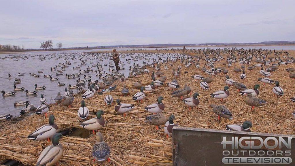 Comment nettoyer ses blettes de canards