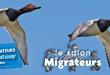 Salon des migrateurs 2018