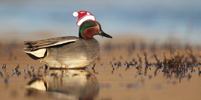 Top 10 idées cadeaux de Noël pour un chasseur de migrateurs !