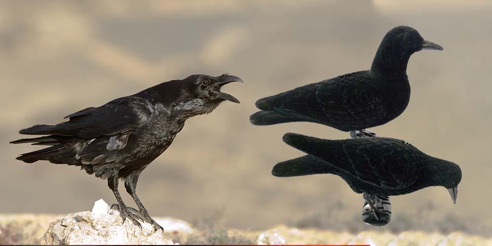 nouvelles formes de corbeau Duck Hunter