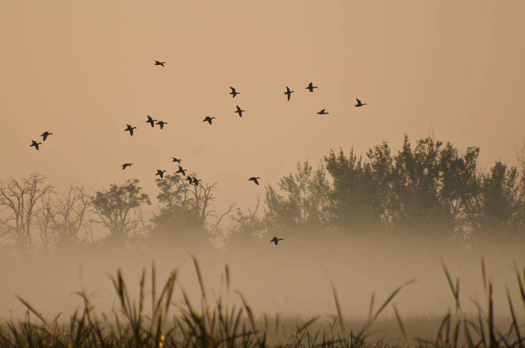 Rapport sur les population d'oiseaux chassables en Europe
