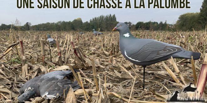 Vidéo : une saison de chasse à la palombe